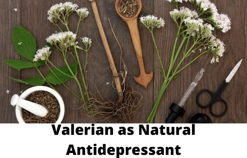 Valerian as Natural Antidepressant
