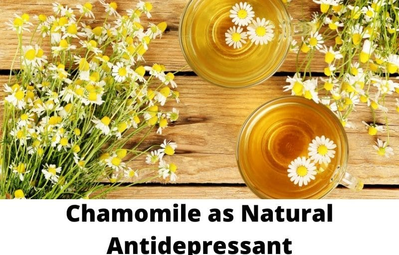 Chamomile as Natural Antidepressants