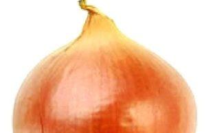 fever onion