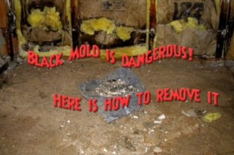 black mold