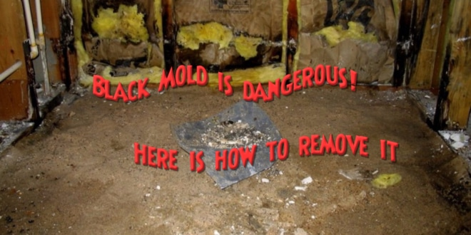 black mold is dangerous here is how to remove it healthy lifestyle. Black Bedroom Furniture Sets. Home Design Ideas