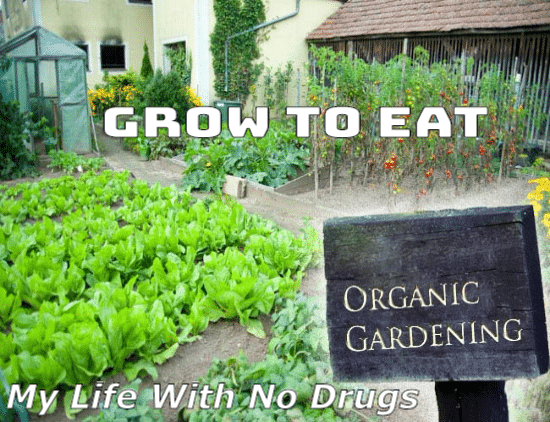 Marvelous Organic Gardening: Grow To Eat