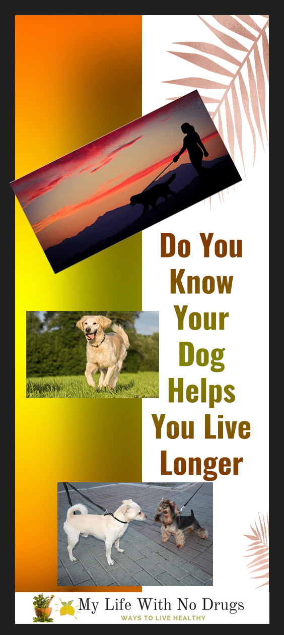 Do You Know Your Dog Helps You Live Longer? Not just fun owning a dog brings in a lot of social, mental and physical benefits that can help you to lead healthy and happy life. Following are some reasons that support my statement so without wasting a minute let's explore them | Mylifewithnodrugs.com