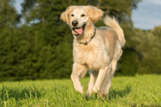 Do You Know Your Dog Helps You Live Longer? Not just fun owning a dog brings in a lot of social, mental and physical benefits that can help you to lead healthy and happy life. Following are some reasons that support my statement so without wasting a minute let's explore them   Mylifewithnodrugs.com