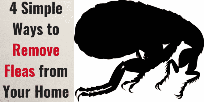 4 Simple Ways to Remove Fleas from Your Home