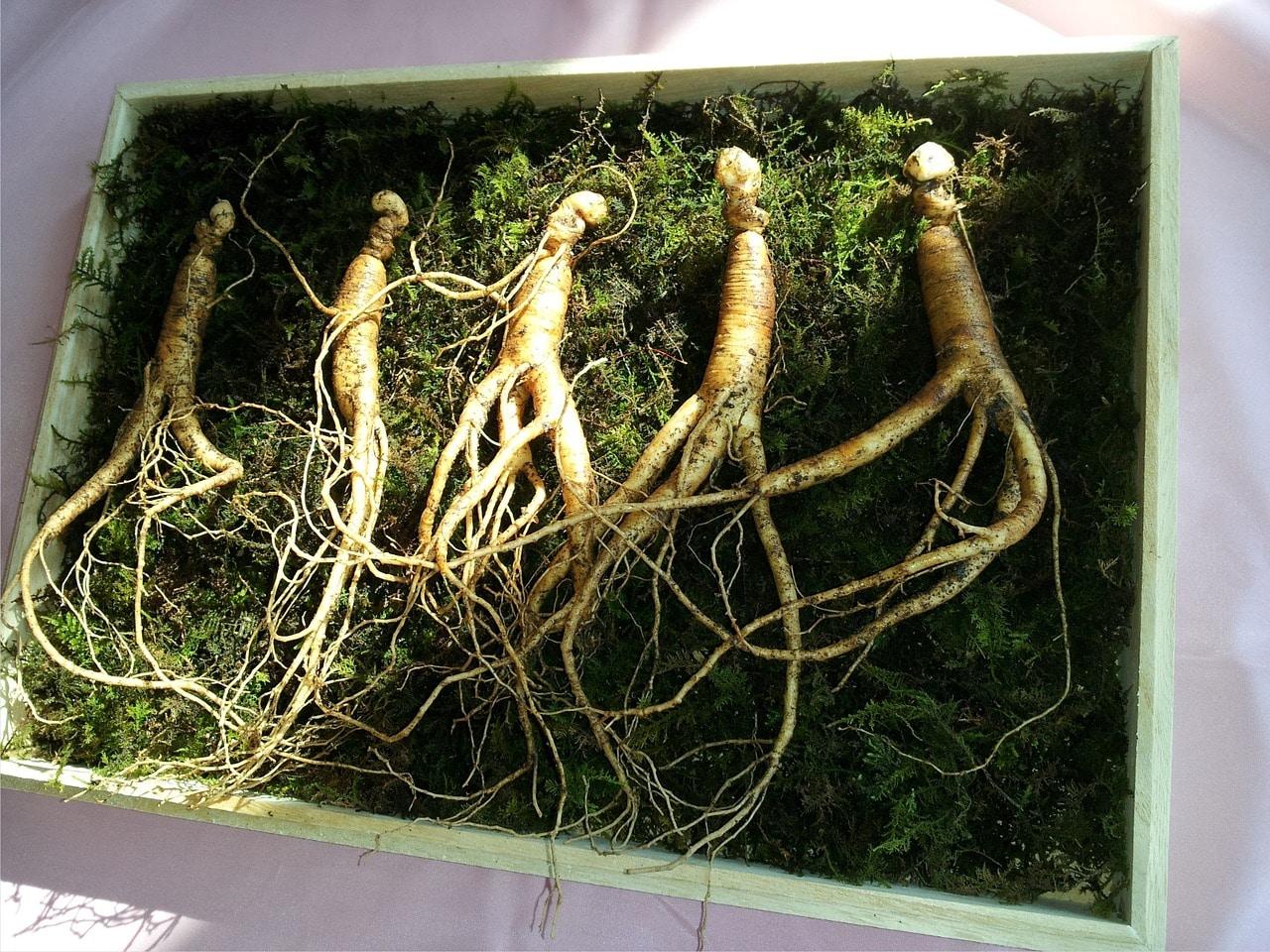 Ginseng herbs